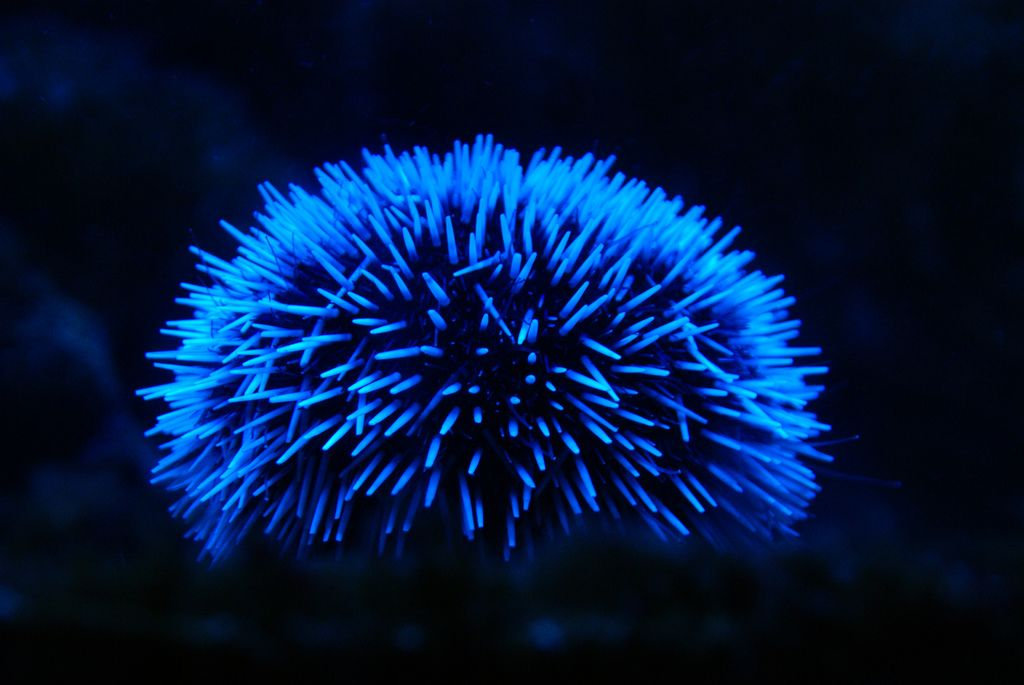 Let there be light on pinterest 52 pins - Bioluminescent aquarium ...